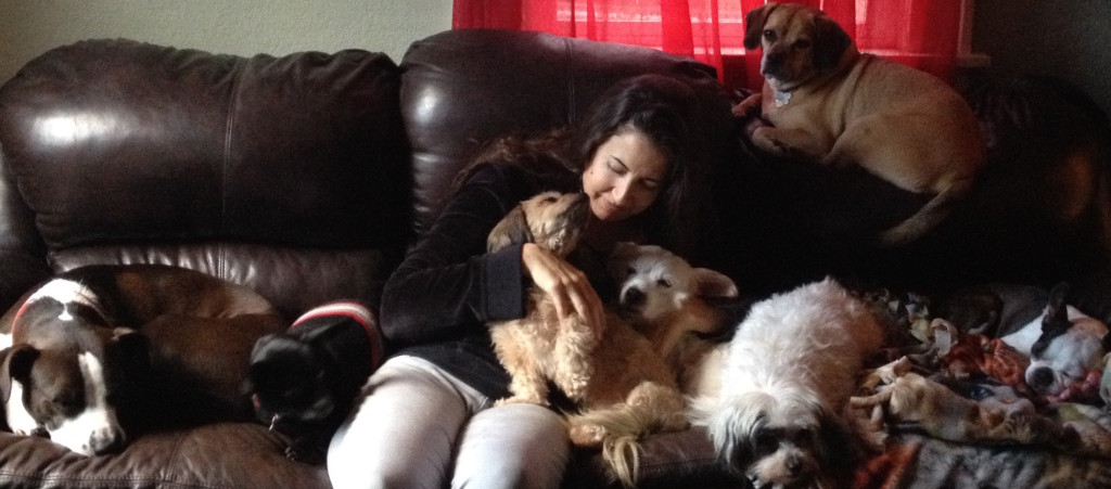 Animal Reiki for dogs